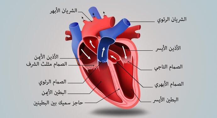 كيف تقي نفسك من خطر الإصابة بأمراض القلب